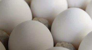 esbenshade white eggs