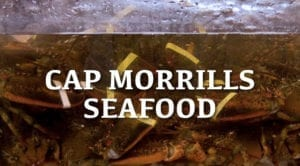 cap morrills logo graphic