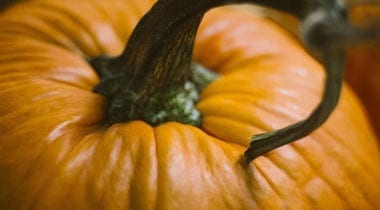 pumpkin top, stem