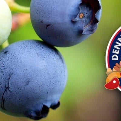 blueberries podcast thumbnail