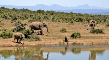 elephants by water in Africa