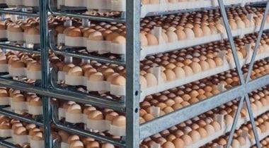 eggs on bakers rack