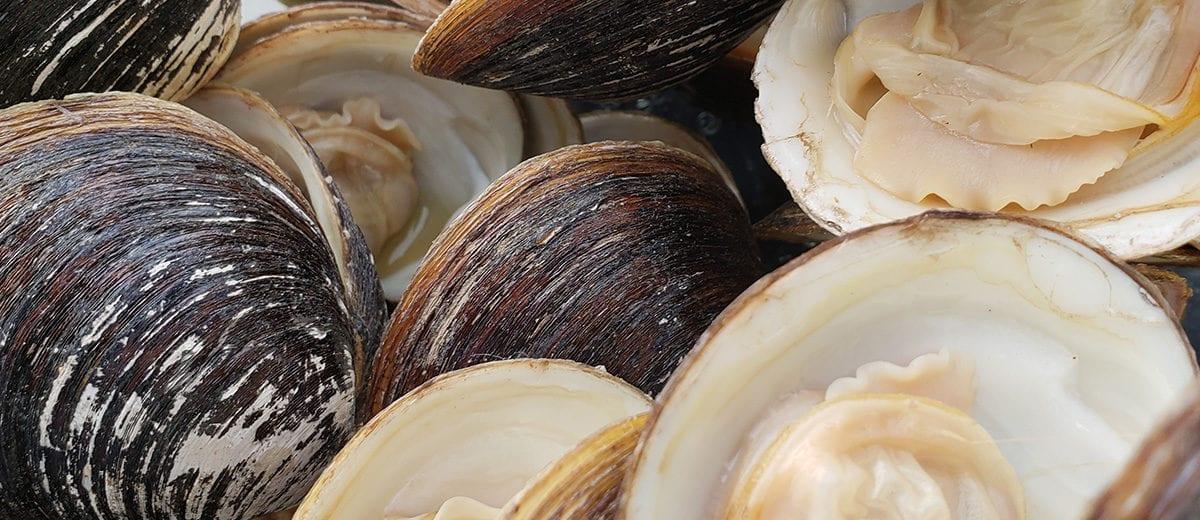 ocean made clams