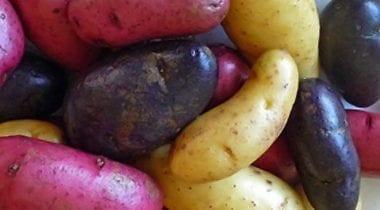 fingerling potatoes, tri colored
