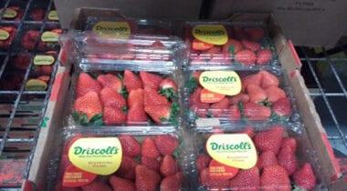 Driscolls Strawberries