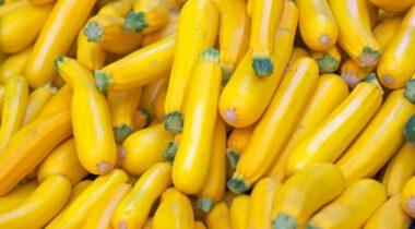 yellow summer squash