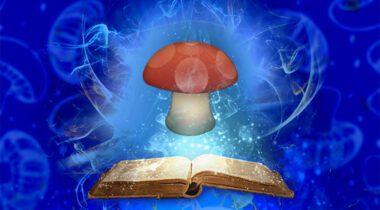 magic mushroom graphic